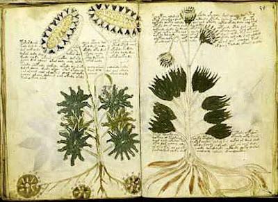 Naskah Voynich
